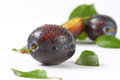 Washed plums Royalty Free Stock Photo