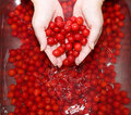 Washing cherries Royalty Free Stock Images