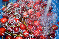 Washing cherries Stock Photography