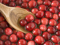 Washing cranberries with an antique wooden spoon Royalty Free Stock Photos
