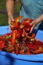 Washing of hot pepper with water Royalty Free Stock Photo