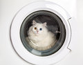 Washing machine and cat Royalty Free Stock Photography
