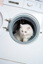 Washing machine and cat washer white Royalty Free Stock Photo