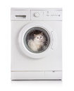 Washing machine and cat washer white Royalty Free Stock Image