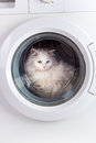 Washing machine and cat washer white Royalty Free Stock Images