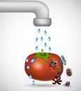 Washing a tomato red from bacterium Stock Photo