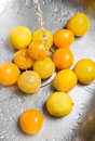 Washing yellow tomatoes and lemons Royalty Free Stock Photo