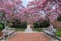 Washington DC Magnolia Garden Spring Royalty Free Stock Photo