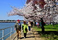 Washington dc people and tidal basin cherry trees visitors walking along the pass the spectacular during their peak spring bloom Stock Photo
