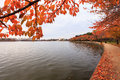 Washington dc tidal basin in autumn cherry trees along the display their orange color along the walking trail beside the potomac Royalty Free Stock Photos