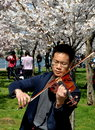 Washington dc violinist with cherry blossoms chinese performing in a grove of trees at peak spring bloom next to the tidal basin Stock Images