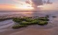 Washington oaks sunrise at state park florida Royalty Free Stock Image