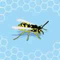 Wasp background Stock Photography