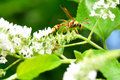 Wasp hold on branch Stock Images