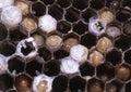 Wasp Nest. Stock Image