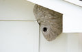 Wasp nest under the eaves Royalty Free Stock Photography