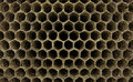 Wasp nest a wall of empty cells of a or a beehive Royalty Free Stock Photography
