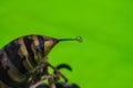 Wasp Sting Macro Photo