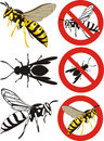 Wasp warning signs parasitic wasps or preys european paper Royalty Free Stock Image