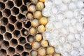 Wasps nest Royalty Free Stock Photo
