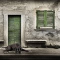 Watchdog in front of the home door Royalty Free Stock Photo