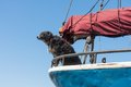 Watchdog protecting the sailing ship Royalty Free Stock Photo