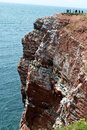Watching breeding birds in the cliffs of helgoland sandstone cliff with german island north sea this is a nature protection area Stock Images