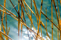 Water bokeh reflections and dry reeds Royalty Free Stock Photo