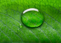 Water bubble talk on green leaf background Stock Photo