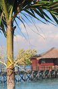 Water bungalow tree and in malaysia Stock Photography