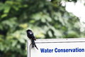 Water conservation a bird seen sitting on a board that talks about Royalty Free Stock Photos