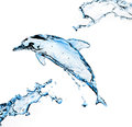 Water Dolphin Stock Photos