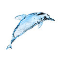 Water Dolphin Royalty Free Stock Images