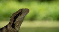 Water Dragon Royalty Free Stock Photo