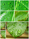 Water drop collage Royalty Free Stock Images