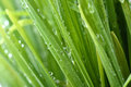 Water drop on the green grass beautiful drops Royalty Free Stock Photo
