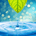 Water drop from green leaf Royalty Free Stock Photo