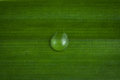 Water drop on green leaf close up background Royalty Free Stock Photography