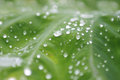Water drop in green leaf on leaves after rain shallow dof Stock Photos