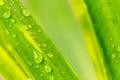 Water drop on green leaf macro Stock Photo