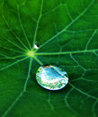 Water drop on green leaf morning grass in summer time Stock Photos