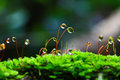 Water drop and moss with moistness in the forest Stock Image