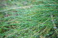 Water dropd on grass macro selective focus Royalty Free Stock Photo