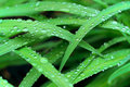 Water droplets on grasses rain accumulate wet leaves of garden day lilies Stock Photo