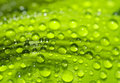 Water droplets green leaf Stock Photo