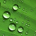 Water droplets on leaf Royalty Free Stock Photo