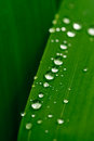Water droplets on a leaf Royalty Free Stock Photo