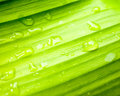 Water drops on banana green leaf Royalty Free Stock Photo