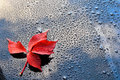 Water drops on car paint with red leaf waterdrops a polished black lacquer surface blue sky white clouds Royalty Free Stock Photos