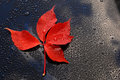 Water drops on car paint with red leaf waterdrops a polished black lacquer surface blue sky white clouds Stock Photography